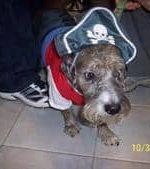 - Dozer in her pirate costume.