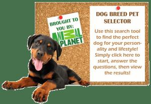 Dog-Breed-Selector-2-300x207