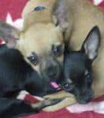 Bella & Brodi