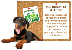 Dog-Breed-Selector-2-300x207
