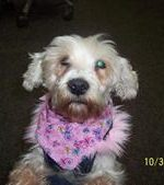 - Snowie is our adoptee from Augusta SPCA. She is dressed up in her Barbie costume for Halloween.