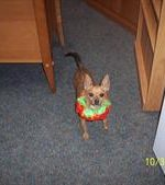 - Maximus in his Halloween Costume.
