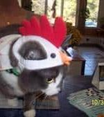 - Halloween Day, Sweet Pea in her chicken costume.